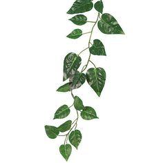 Green Pothos Garland
