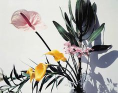 We're loving floral arrangements inspired by Japanese Ikebana - sculptural, striking, experimental. Flowers Nature, Exotic Flowers, Beautiful Flowers, Tropical Flowers, Summer Flowers, Wild Flowers, Foto Still, Foto Art, Pics Art