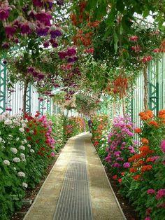 Visit to the royal greenhouses of Laeken (Belgium) - Botanical Gardens Trend Most Beautiful Gardens, Beautiful Flowers Garden, Amazing Flowers, Flowers Nature, Beautiful Nature Wallpaper, Beautiful Landscapes, Landscape Design, Garden Design, Landscape Wallpaper