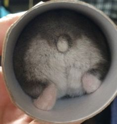 A platform for people who love animals. Baby Hamster, Hamster Life, Cute Animal Memes, Cute Animal Pictures, Cute Funny Animals, Zoo Animals, Animals And Pets, Funny Hamsters, Cute Mouse