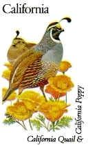 California State Bird - California Valley Quail AND California State Flower - Golden Poppy