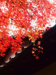 Roof detail in autumn--Japan
