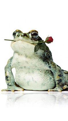 My frog prince ♥ ich bin nur versehentlich hier gelandet,was soll's, ich bin genau so schön und lässig ♥ hier kriegt mich keiner wieder weg !