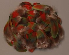 Rare! Rainbow Macaw Body Feathers 10 pcs from Greenwing Parrot Bird Red Green - pinned by pin4etsy.com