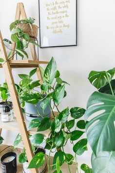 Indoor House plants guide - beginner plants you can't kill 2