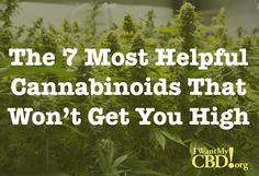 The 7 most helpful cannabinoids with no high. Non-psychoactive, non-psychotropic CBD oil with incredible health benefits. Health Benefits, Health Tips, Hemp Oil, Health Problems, Cannabis, You Got This, Bath Bombs, Weed, Top