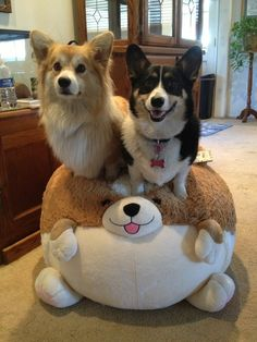 Two Silly Corgis. I follow these two on instagram! I actually follow a lot of corgis on IG. I may have an obsession...