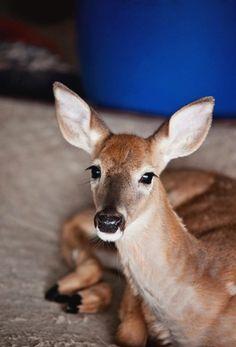 Dear Deer | Design Seeds