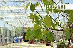 In dieser wunderschönen Atmosphäre könnt ihr euch bei uns nicht nur  beraten lassen in Sachen Pflanzen und Garten, sondern auch Shoppen,  Essen, Trinken und Feiern. Zum Beispiel bei der Gartenlounge am  29.Juni.  Infos unter: www.facebook.com/events/122300611974094/  #gartencafe #kriegergut #perg Juni, Events, Facebook, Landscape Nursery, Plants, Nice Asses