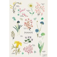 Flowers wall poster | French Blossom
