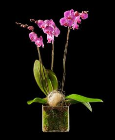 BRISTOL Tazón con flores de temporada. http://www.mardeflores.com/felicitar/bristol #EnvíodefloresMadrid #FloristeríaMadrid