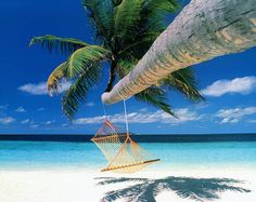 Hammock on a beach.....I would totally flip on this hahahaha