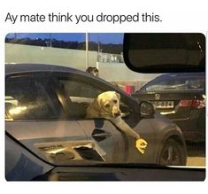25 Bitchy Memes That May Infuriate You Bad Memes, Dankest Memes, Super Funny, Funny Cute, Funny Videos, Animal Memes, Funny Animals, Animal Logic, Funny Jokes