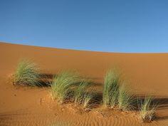 Dune,Erg Chebbi, Maroc (Morocco)