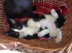 Een vrouwtjes kitten 💚