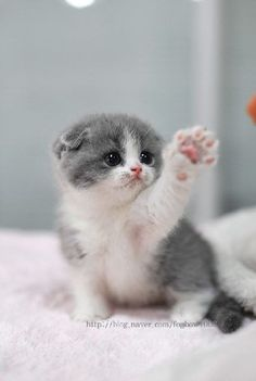 AWW So Cute ! #cute #kitten #cat #poes