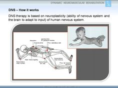 DNS - How it works. Human Nervous System, Neuroplasticity, Dns, Physical Therapy, Physics, It Works, Exercise, Health, Fitness