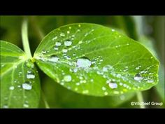 3 HOURS Relaxing Music with Rain Sounds Meditation - YouTube