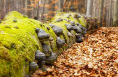 Snová romantika pro 2 uprostřed chráněné krajinné oblasti s vířivkou, saunami, masážemi a polopenzí v ceně / Kouzelný děda Europe Photos, Czech Republic