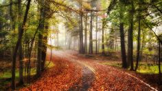 autumn road forest wallpaper download high variety