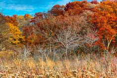 Autumn, Lulu Lake  by Matthew John George on Capture Wisconsin // Lulu Lake state natural area, 2013