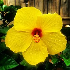 : I love this flower! Clearwater Florida, Naples Florida, Florida Beaches, Most Beautiful Pictures, Cool Pictures, Florida Tattoos, Florida Plants, St Petersburg Florida, Parrot Toys
