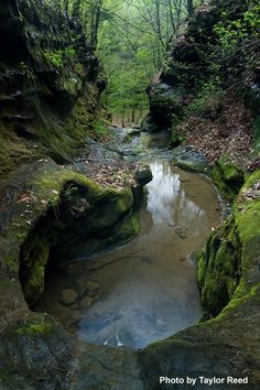 Little Grand Canyon     Southern Illinois   - Google Search