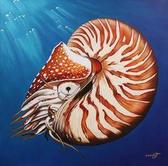 Nautilus - Google Search