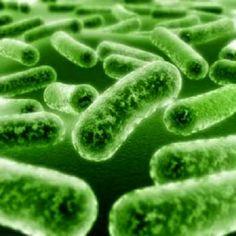 Penyebab Virus Herpes