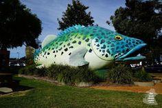 Wildlife Tourism – Tours In Australia Wildlife Tourism, Cod, Swan, Victoria, Tours, Australia, Travel, Swans, Viajes