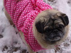 Lola, my beautiful Pekepug! <3