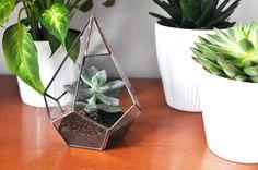 Notre guide pour entretenir son terrarium : http://petitstudio.fr/belles-plantes/
