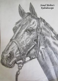 """""""A HORSE WITH NO NAME"""" -SMM - Sketching by Sonal M. Mehta in Sketches at touchtalent 17607"""