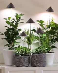 Kasveja hoitava valo siellä missä auringonvalo ei riitä tai puuttuu kokonaan. Lampunvarjostin kahtena eri värinä, teleskooppivarsi 30 sentistä yhteen metriin. Garden Plants, Home, Plants, Ad Home, Homes, Haus, Houses