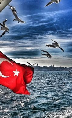 Ah schönes Istanbul - Fabienne Istanbul, Turkish People, Autumn Scenery, Im In Love, Cool Pictures, I Am Awesome, Nature, Waves, Bird