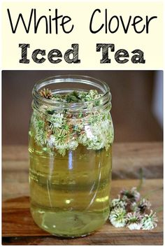 White clover iced tea is not only delicious, but is also high in vitamins and minerals. Learn how to make this tasty and refreshing foraged drink! #whiteclover #clover #clovertea #whiteclovertea #whiteclovericedtea #foraging #wildcrafting #herbalism