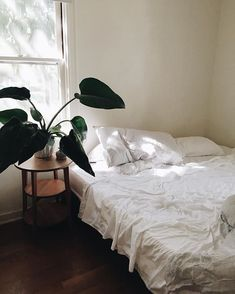 bed and plants