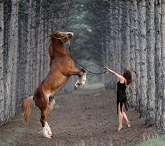 horse tame