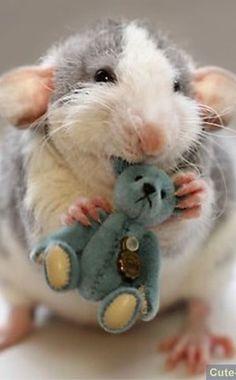 Rat met een knuffel