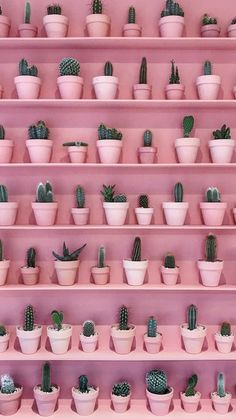 Asuman Pins The cactus and the rose: two deco trends that we love to add a touch . Bedroom Wall Collage, Photo Wall Collage, Wallpaper Iphone Cute, Flower Wallpaper, Plant Wallpaper, Wallpaper Quotes, Pastel Pink Wallpaper Iphone, Wallpaper Backgrounds, Iphone Background Pink
