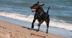 Ecomundo: Qué hacer con el perro en la playa