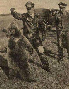 Zwei deutsche Luftwaffe Offiziere spielen mit einem bären auf den russischen Steppen, zwischen 1941 und 1942.