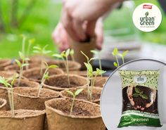 Soil enriched with bio organic manure Prithvi has optimum soil physical structure and texture.  Benefits: Better water & nutrient retention capacity. Helps in better root growth. Provides good anchorage to the plants. Order now - goo.gl/OqoT9S