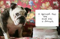 The Pros & Cons of English BullDogs - Nikki Carvey  This is all so true! Please be sure an Englis Bulldog fits your lifestyle! They're so adorable but not for everyone. The pics are so cute!