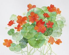 Nasturtiums watercolor original painting 8 x 10 via Etsy