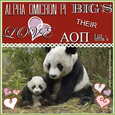Your Niche LaBon Perfume. Each perfume is hand blended with luxurious perfume oils. Sorority Quotes, Alpha Omicron Pi, Greek Life, Big Love, Uplifting Quotes, Perfume Oils, Panda Bear, Be Yourself Quotes, Collection