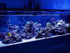 Aquarium Stand, Saltwater Aquarium, Saltwater Tank