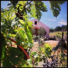 Echo Canyon Winery,  near Page Springs,  was the site of the first wine production in the Verde Valley.