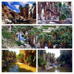 Indian Canyon (Palm Canyon) - Palm Springs