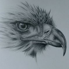 Pencil Drawings Eagle drawing in pencil Pencil Drawings Of Animals, Bird Drawings, Art Drawings Sketches, Cool Drawings, Drawing Birds, Drawing Animals, Realistic Animal Drawings, Drawings Of Eagles, Animal Sketches Easy